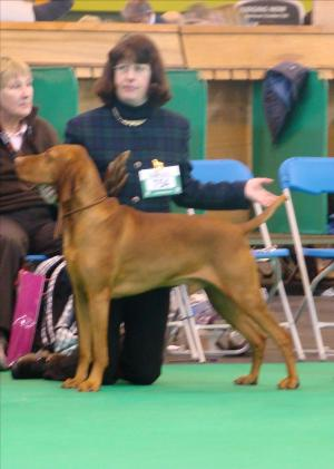 Kristo being awarded another 2nd at Crufts 2011