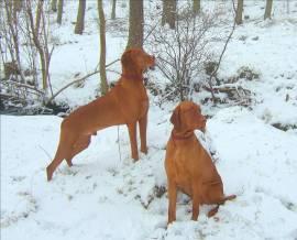 M&K SNOWDOGS