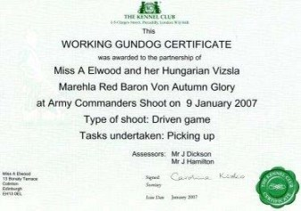 Working Gundog Certificate