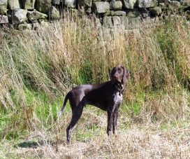 GermanPointer_AElwood32